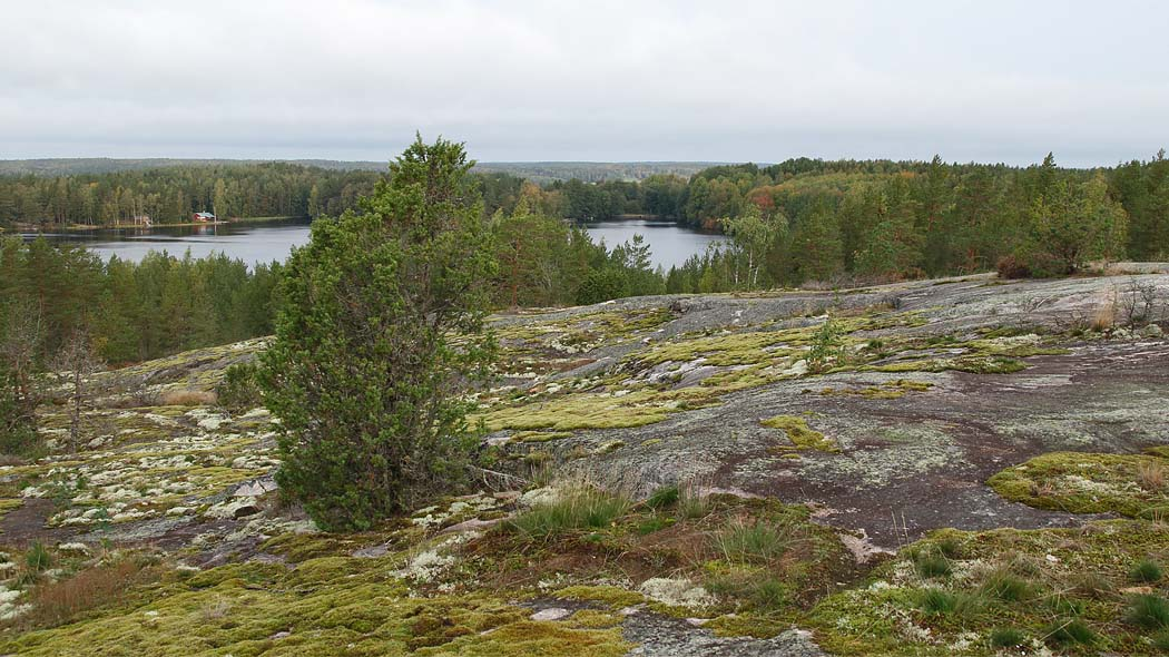 A view from the nature trail. In the foreground mossy rock and in the background forest and the lake.