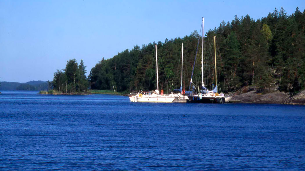 Four sailing boats are tied to the rocky shoreline. Pines and an occasional birch grow at the shore.  Forested islands in the background.