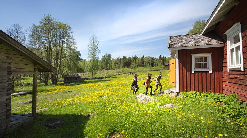 Three people about to enter the Linnasaari hut. It is summer and grass is growing in the yard and the dandelion is flowering. A roundpole fence and forest can be seen in the background.