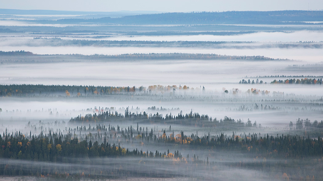 Foggy autumn scenery in Syöte National Park. Photo: Eeva Mäkinen.