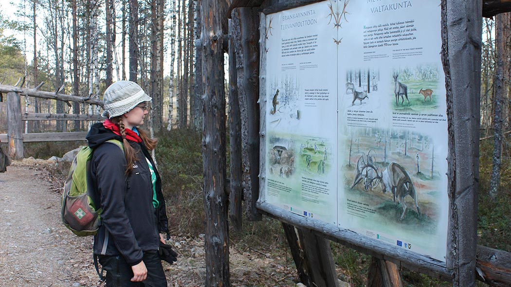 A hiker reading an information board with information about the forest reindeer. The area is surrounded by a pine forest.