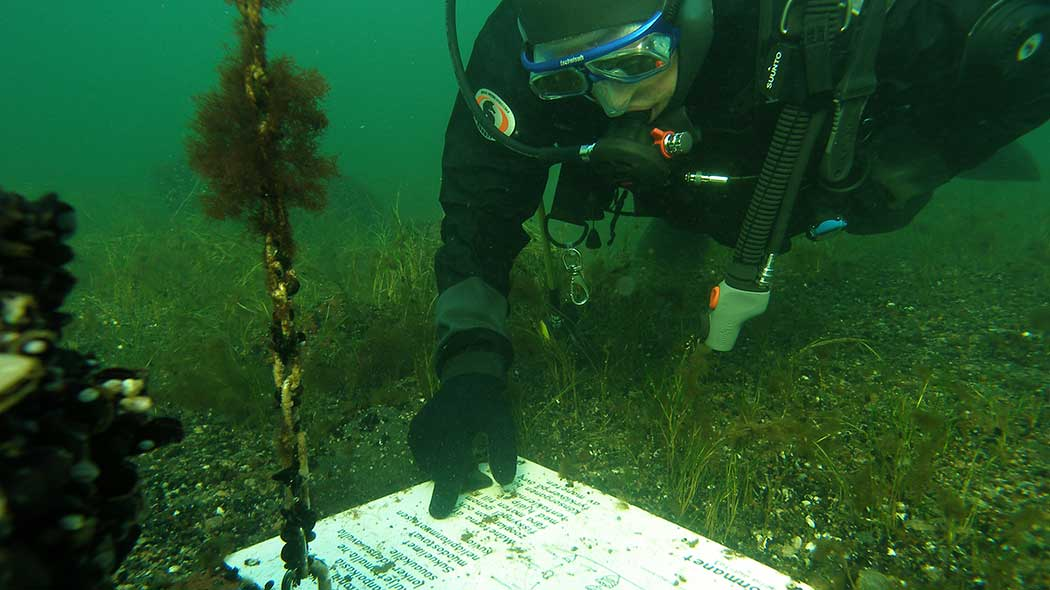 Divers pointing at a sign on the seafloor. The seawater is murky and vegetation grows at the seafloor.