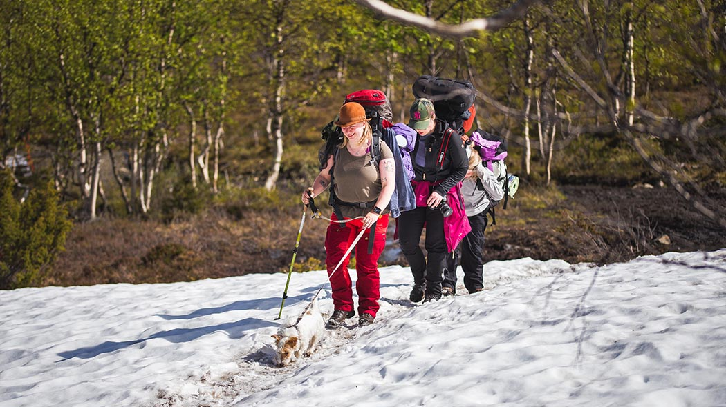 The fells and forests of the Pallas-Yllästunturi National Park are suitable for both day-trips and longer hikes. Photo: Heikki Sulander / Rinkkaputki.com.