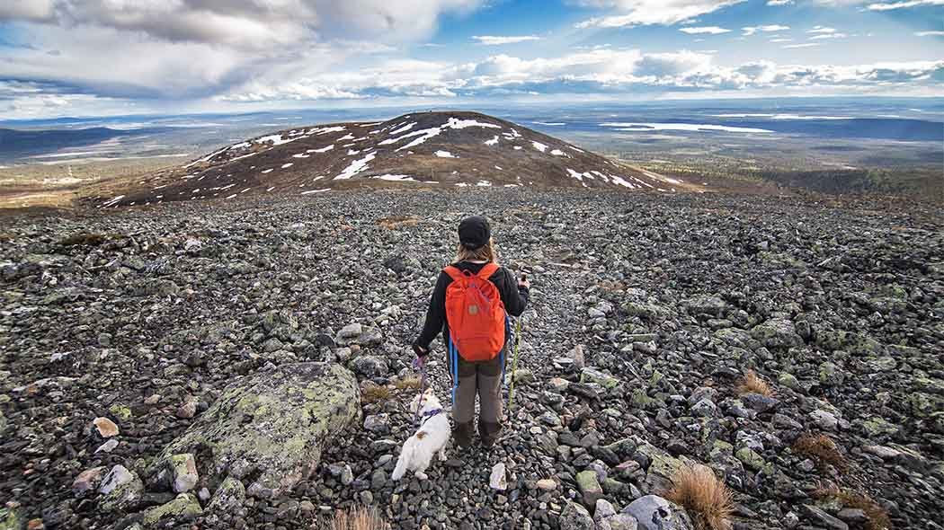 Taivaskero Fell is the highest point in the Pallas-Yllästunturi National Park. Photo: Heikki Sulander / Rinkkaputki.com.