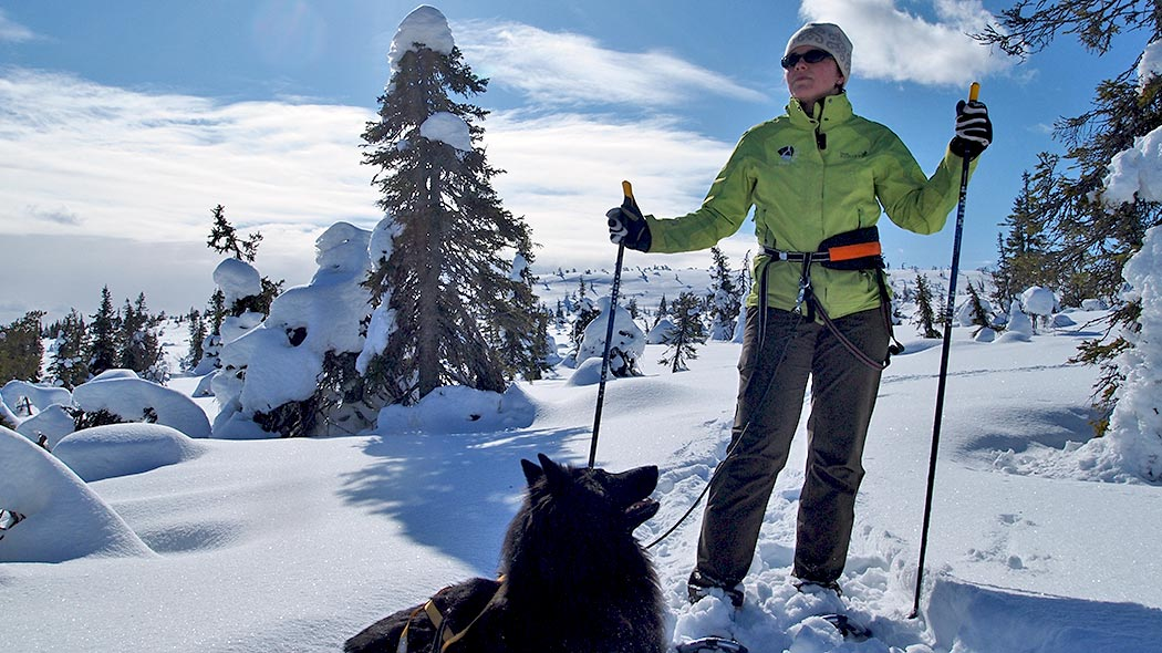 Snowshoeing in Riisitunturi with dog. Photo: Elina Kolppanen.