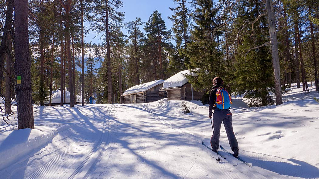 Sunny spring landscape. Skier on the trail, in the background a toilet and a wooden shed and large pine trees.