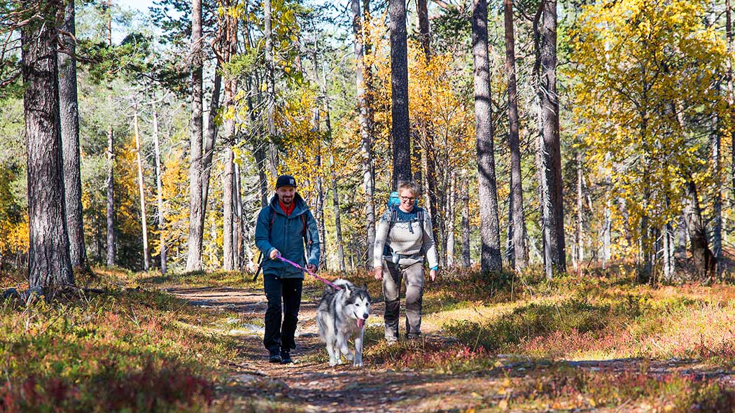 Two persons and a dog hiking in autumn forest.