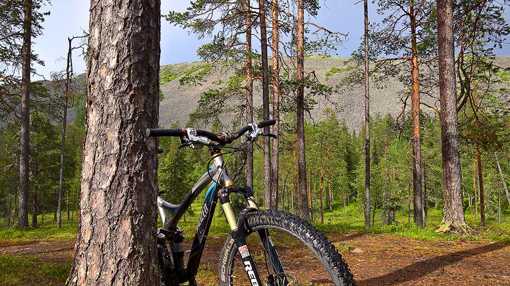 A mountain bike leaning against a pine trunk with forest and a fell in the background.