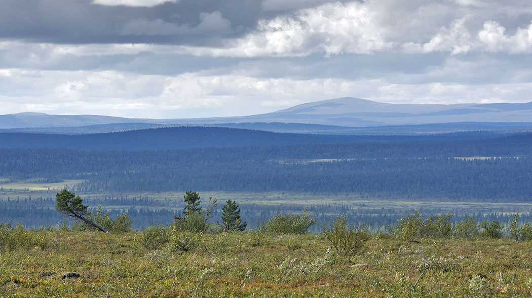 Pulju Wilderness Area. Photo: Seija Olkkonen.
