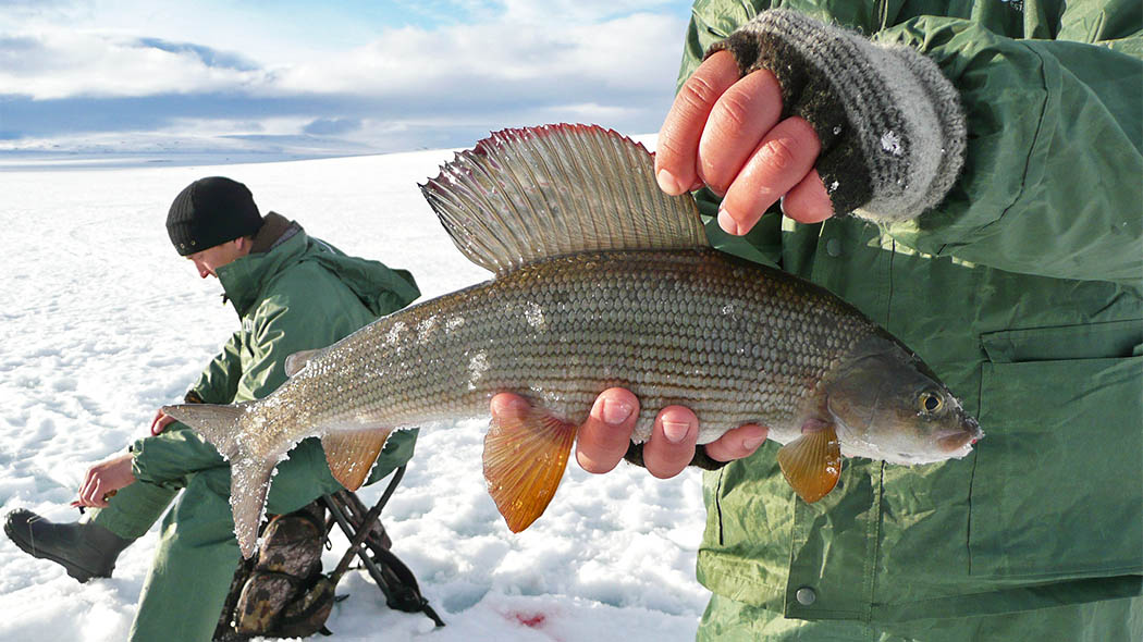 Ice fishing for the Arctic Grayling. Photo: Erkki Tuovinen
