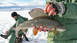 Ice Fishing for the Arctic Grayling (Thymallus arcticus). Photo: Erkki Tuovinen