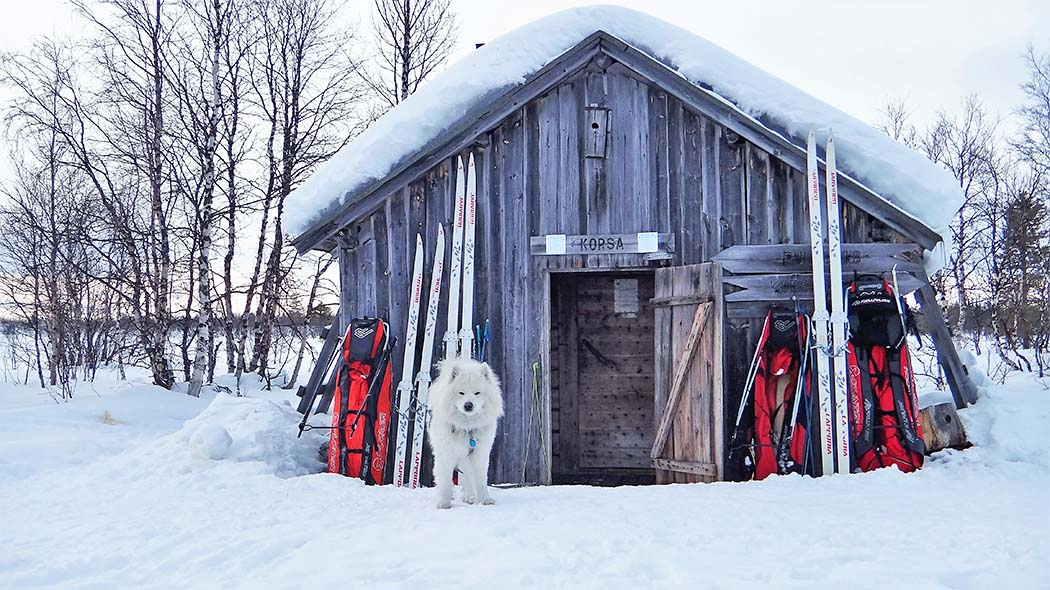 A dog in front of the Korsatupa open wilderness hut. There are skis and Lapp's sledges leaning against the wall of the hut, and the door is open.