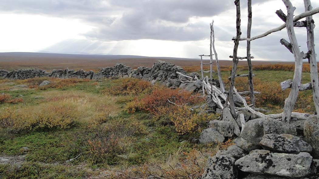 Lichen-covered rocks and pieces of wood form the remains of an old reindeer fence. The surrounding fell scenery is in fall colours.