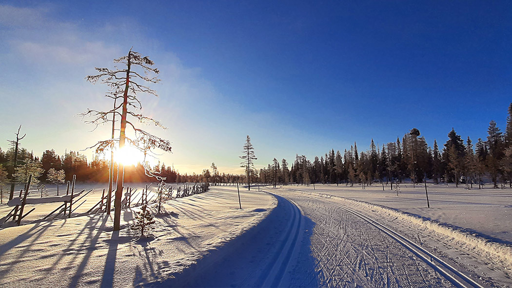 Winter landscape with a cross-country ski track in the mire. In the background a forest edge, behind which the sun is setting. On the right side of the picture there is a frosty kelo-log tree.