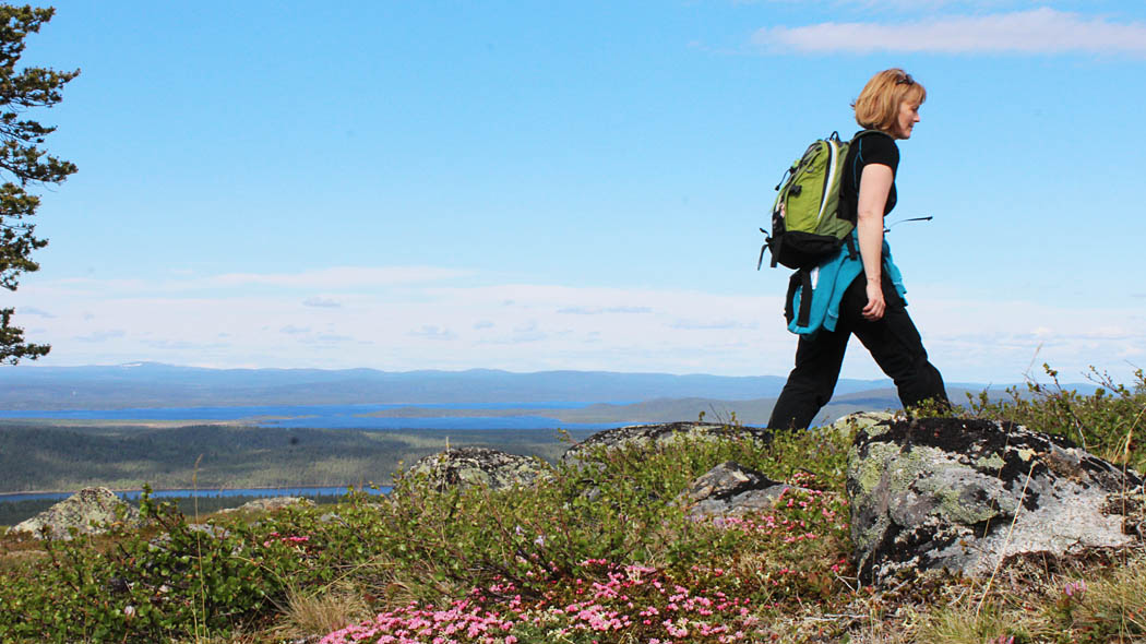 A hiker with a backpack walking on top of a fell. Flowering vegetation can be seen in the foreground and summery lake- and forest landscape opens up in the background. There are fells on the horizon.