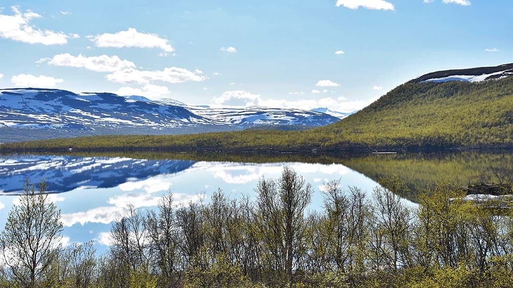 In the Kilpisjärvi area, snow usually melts in the mountain birch forests in early June, and Lake Kilpisjärvi throws off its icy cover near Midsummer. Photo: Tiia Lepistö.