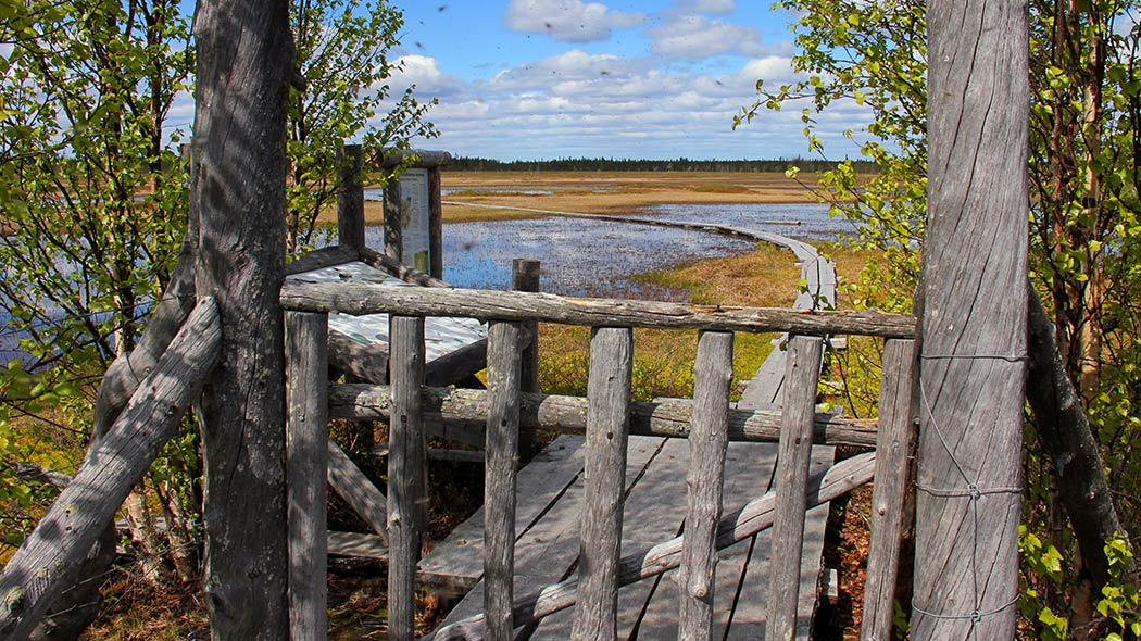 A wooden gate that leads to duckboards that go over an open mire. Behind the gate there's two information boards and a broader wooden duckboard area. The blue light clouded sky is reflected on the mire water.