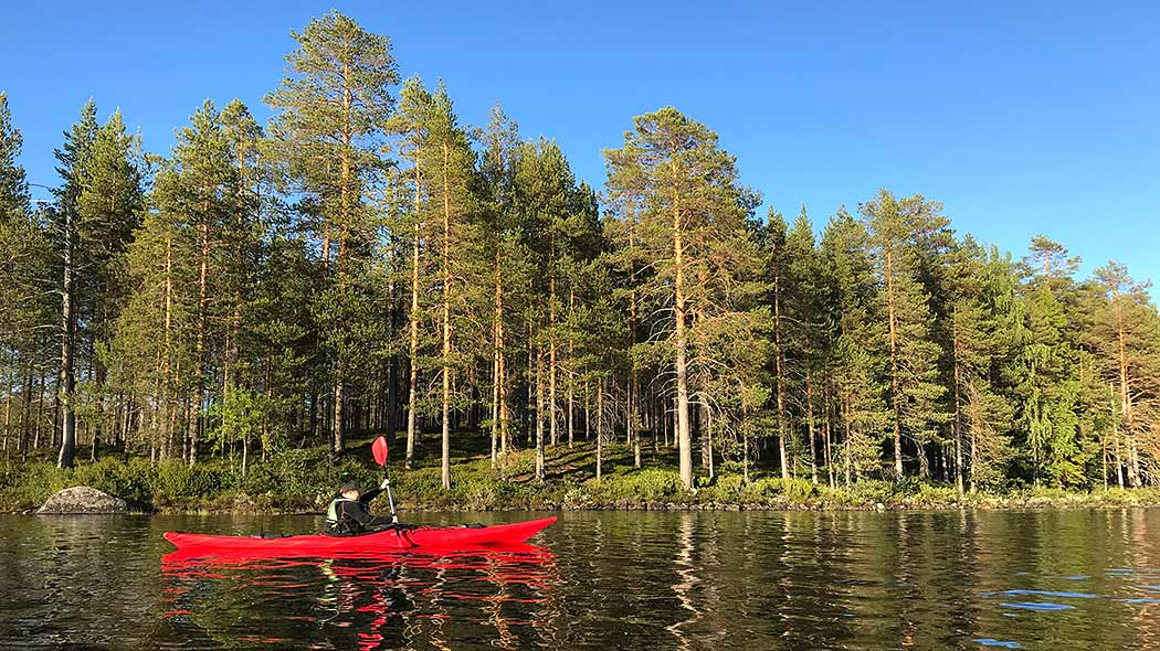 Canoeist on the lake in a sunny weather. Shore in the background is filled with pine forest.