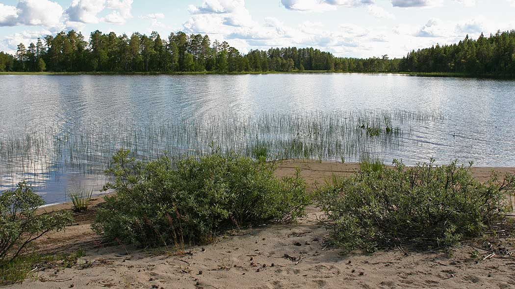 Diverse vegetation on a sandy shore. Shore on the opposite side of the lake is densely wooded.