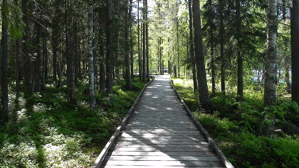 Wide duckboards leading through dense forest.