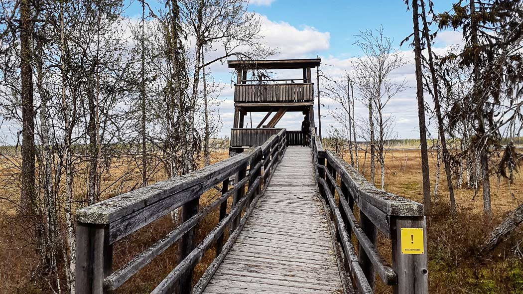 A wooden ramp towards the bird tower. The wooden structures are old and covered with moss. In the background is a mire, in front are birches that have already shed their leaves.