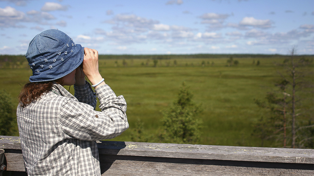 A person watching through binoculars towards a summer mire, the sky has light clouds.