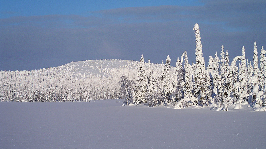 A winter fell view with untouched snow and trees covered with heavy snow.