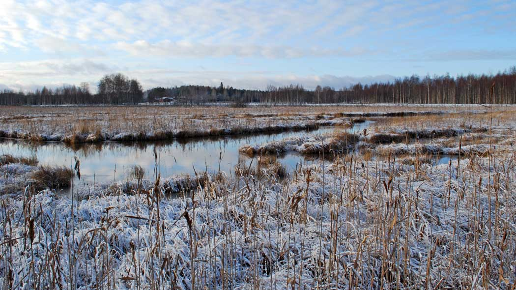 A thin layer of snow on wetland.