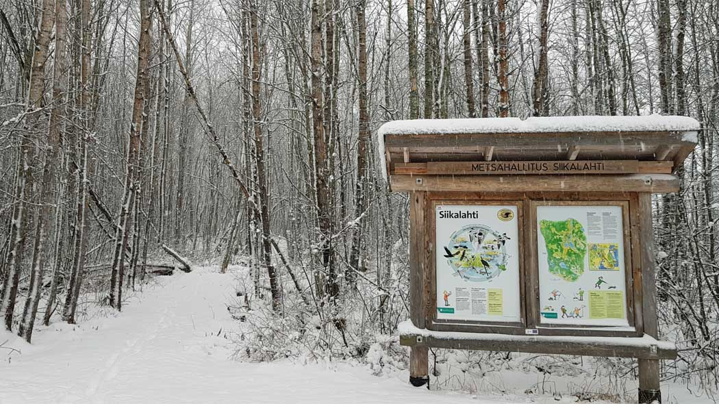 The trail through a young snow-covered deciduous forest starts at the parking lot, where the Siikalahti information board also can be found.