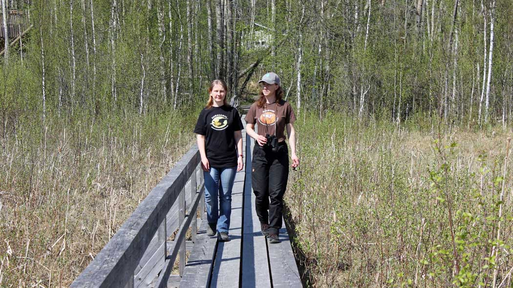 Two hikers on duckboards in the wetlands. One person has binoculars. It is springtime and the deciduous trees are already green.