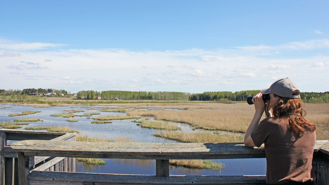 A person with binoculars in the bird-watching tower. The tower is surrounded by vast wetlands with alternating small grassy islet and water. Fields, forests and farmhouses can be seen in the background.