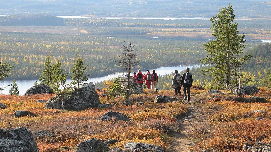 A group of hikers on trail in Inari in autumn. The trail passes over a fell with a few small trees. A view of forests and lakes opens up before the hikers.