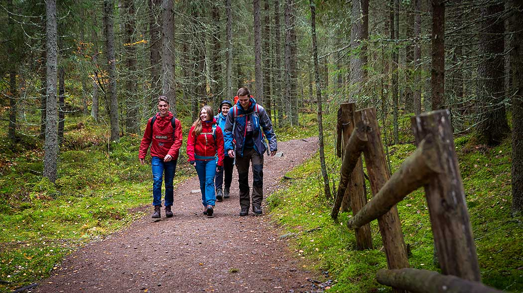 A group of hikers on a trail in a spruce forest.