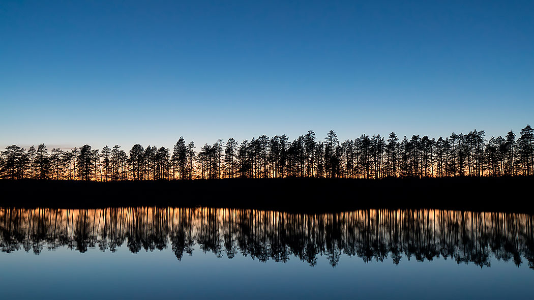 A picture from a lake at dusk. The shore runs through the whole picture. The light from behind creates a reflection of some trees in the lake
