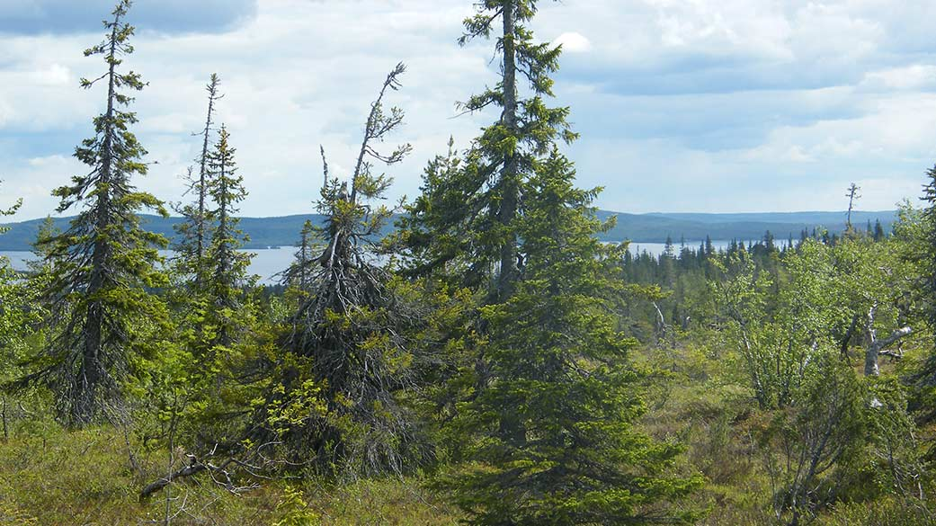 There is forest in the foreground and in the background, fells and lakes.