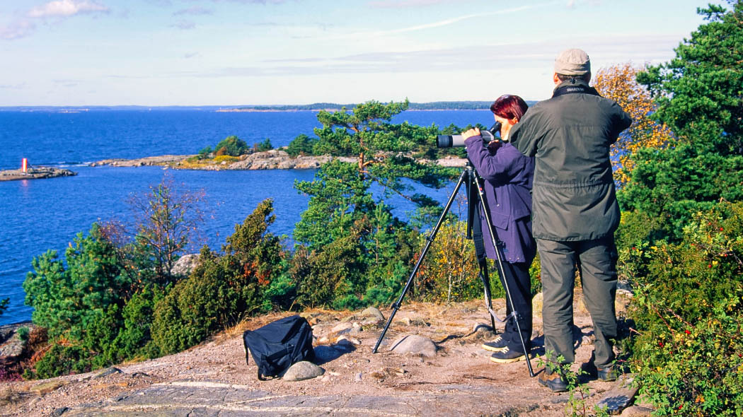 Two persons standing on a rock by the seashore. One person is looking at the sea through a telescope. A few pine trees and junipers grow on the rocky shore. A rocky islet can be seen in the background.