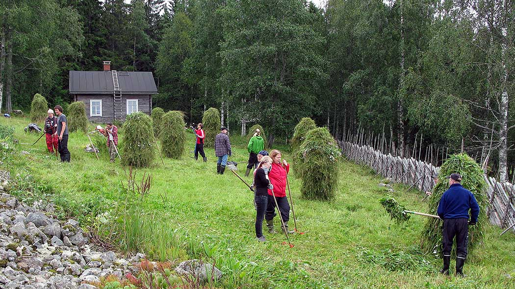Volunteer workers are gathering hay on a meadow. A small cottage is in the background.