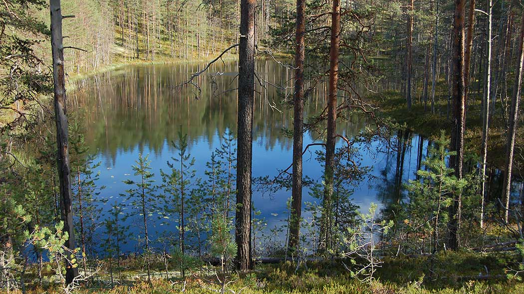 "A ""suppalampi"" pond. Photo: Saara Airaksinen."