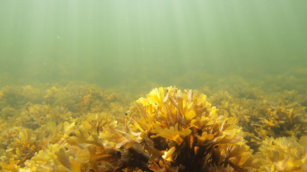 Coral looking seaweed on the seafloor. The sun's rays are sifted through the water.
