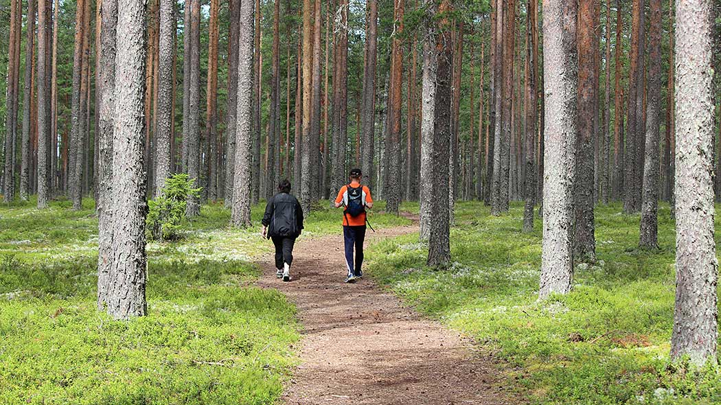 Two hikers walking on a trail in the forest. The forest around them is a bright, summery pine forest.