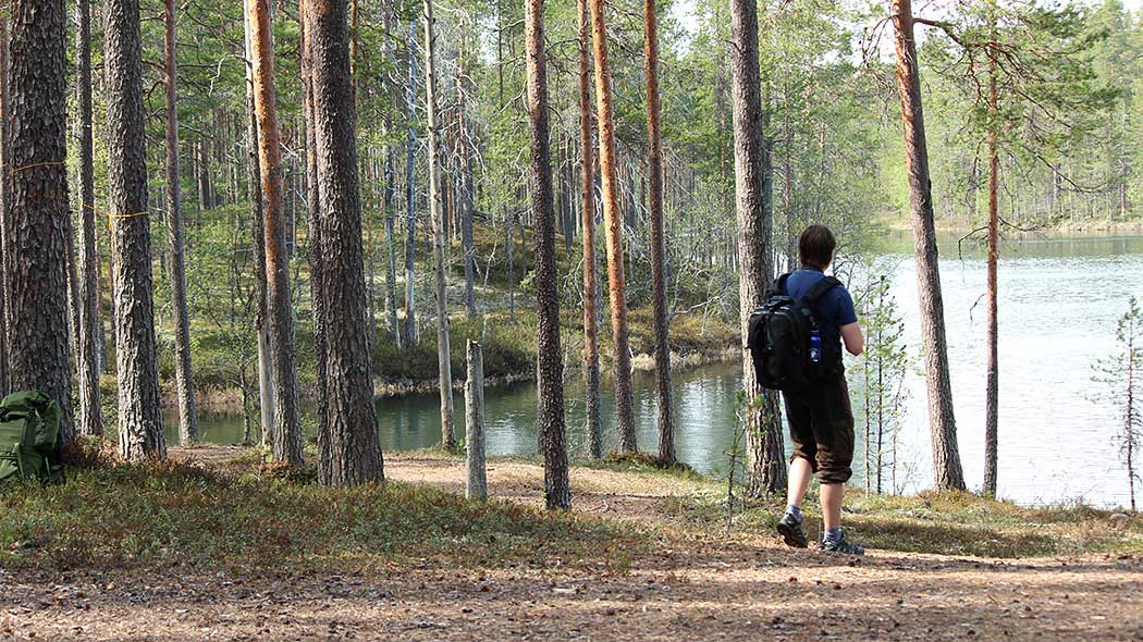 A hiker with a rucksack on their back standing in a pine heath forest on the shore of a lake.