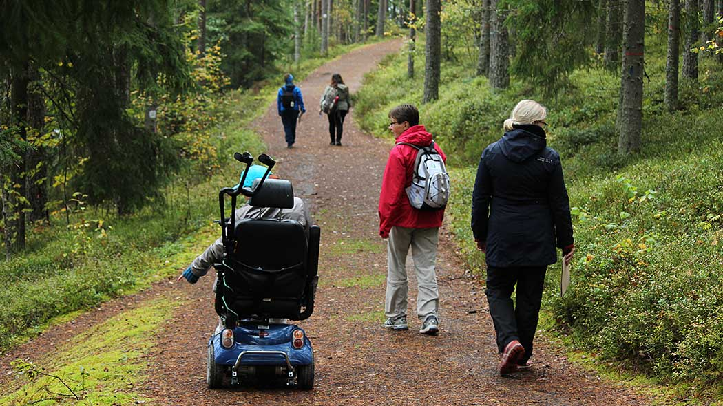 Hikers on a gravel road in the autumn forest. One of the hikers is riding in an electric wheelchair.