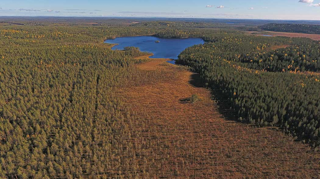 An aerial photograph of a mire, a forest and a lake.