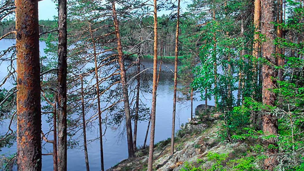 A lake seen from a forested cliff.