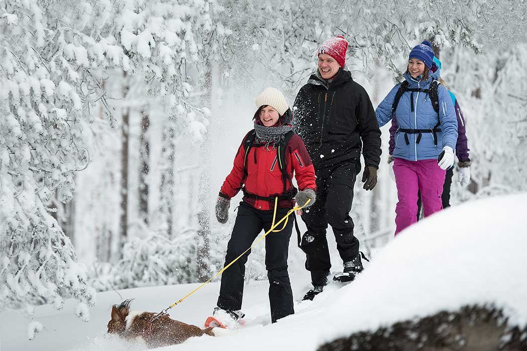 Three hikers and a dog in a snowy forest.