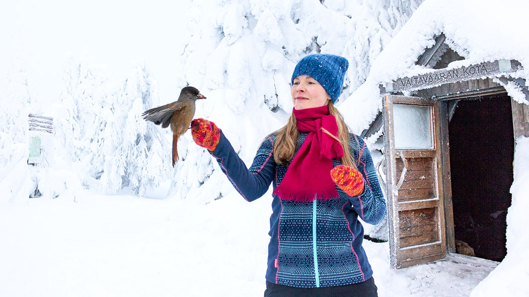 A Siberian jay has landed on the arm of a woman at the summit of Valtavaara Fell in Kuusamo. Photo: Metsähallitus/ Sini Salmirinne