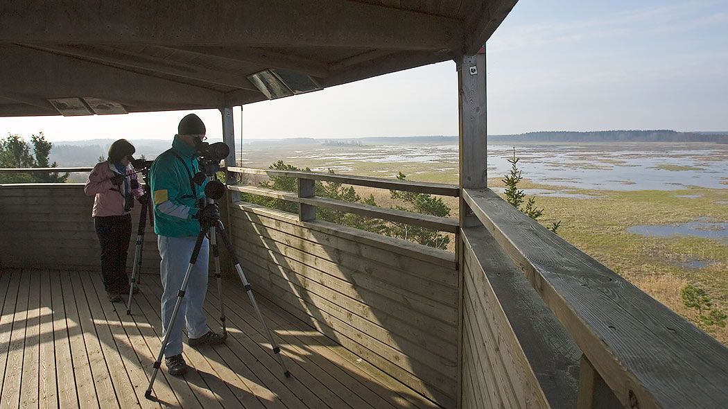 Two hikers in a wooden bird-watching tower. Both of them have tripod-mounted telescopes. A view of the mire opens from the tower.