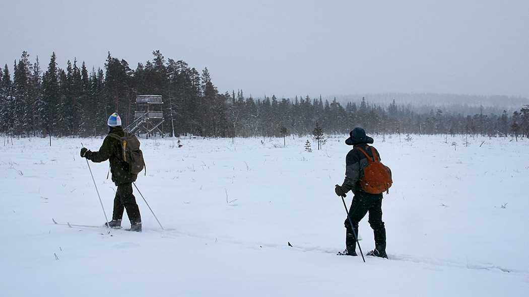 Wilderness skiing outside marked trails at Arctic Circle Hiking Area. Image: Olli Vainio
