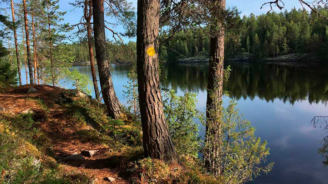 A hiking trail goes next to a lake. Pines are marked with yellow route markings. Over the calm lake, you can see the opposite shore.