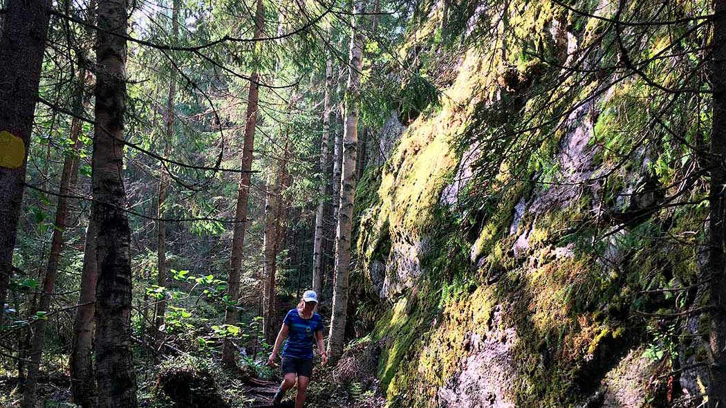 A hiker in summer clothes walks down a forest path. A high cligg rises next to the path.